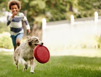 boy_chasing_dog_with_frisbee (1)